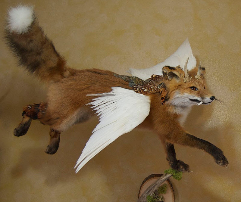 Rouge taxidermy